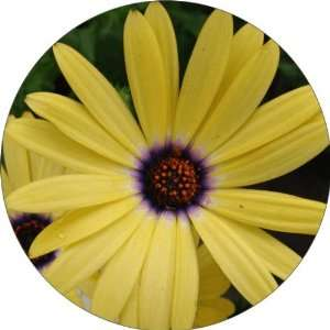 Yellow Flowers Art   Fridge Magnet   Fibreglass reinforced plastic