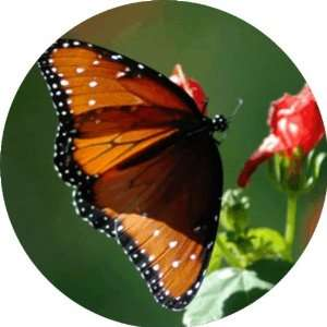 Orange Butterfly Art   Fridge Magnet   Fibreglass reinforced plastic